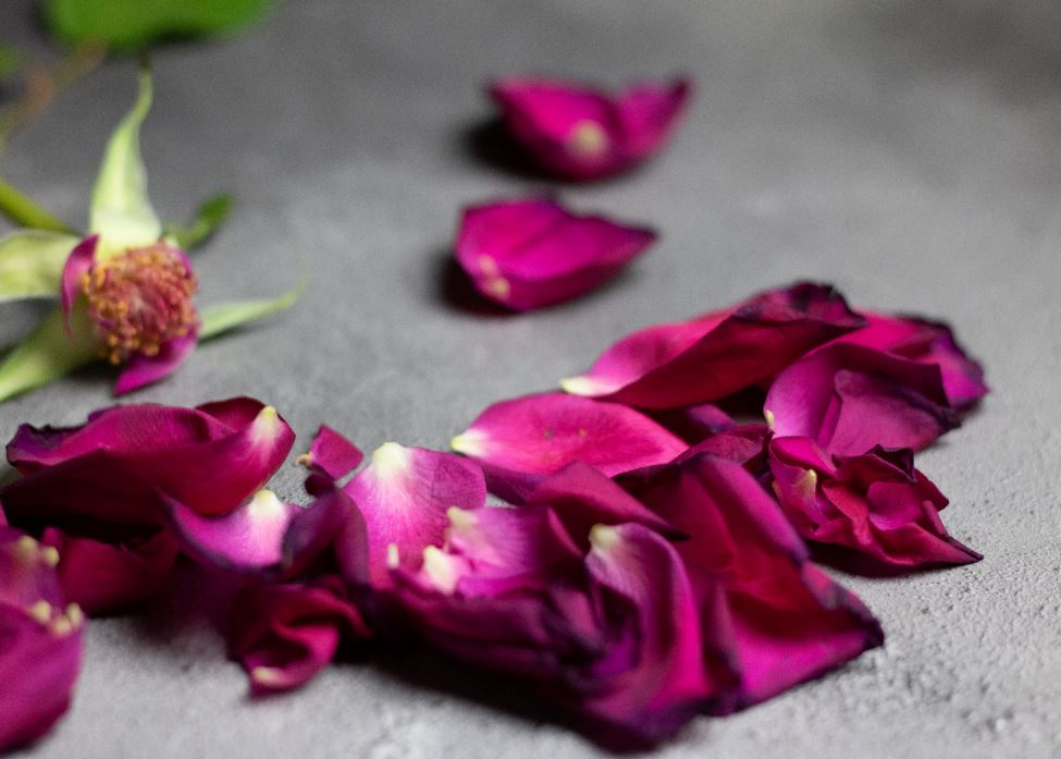 Finding The Money For Cremation Services