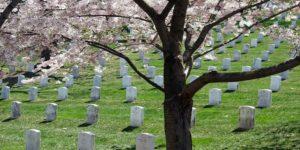 cremation service Glenview, IL